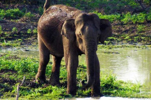 Yala Nationalpark Sri Lanka Rundreise Reisetipp